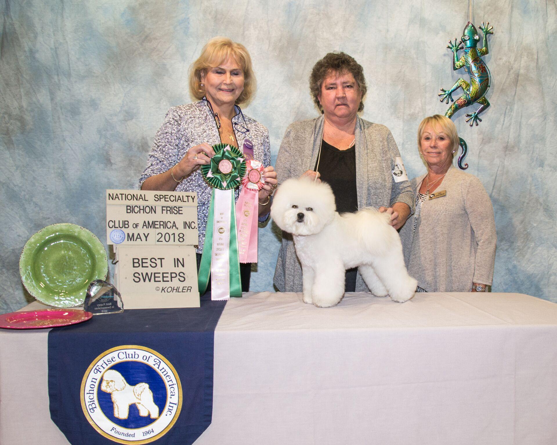 Bichon Frise Club of America   Member of American Kennel Club